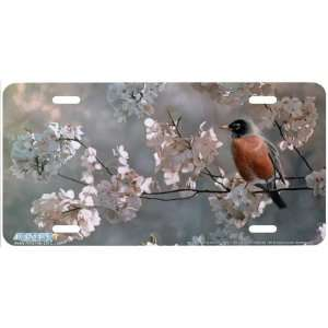 3532 Ambassador of Spring American Robin Bird License Plate Car Auto